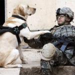 Amazing Dog Photos