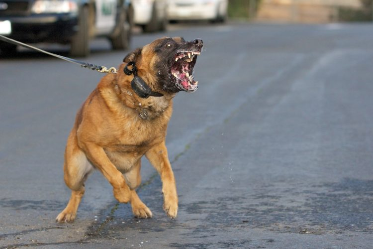 Are some breeds of dogs actually born bad, or is it how you raise and treat a dog?