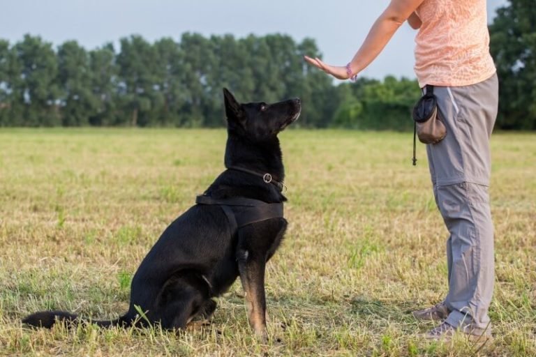 Five Basic Obedience Commands Your Dog Should Learn