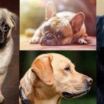 The Best Dog Breeds for Kids and Families