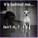 Best Funny Dog and Cat Quotes