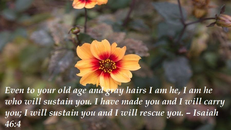 19 Biblical Birthday Wishes