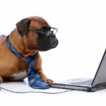 Consider The Convenience To Pick Canine Products Online