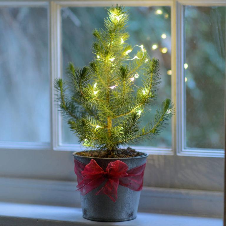 18 Beautiful Christmas Tree