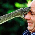 Cobra Snake Pictures