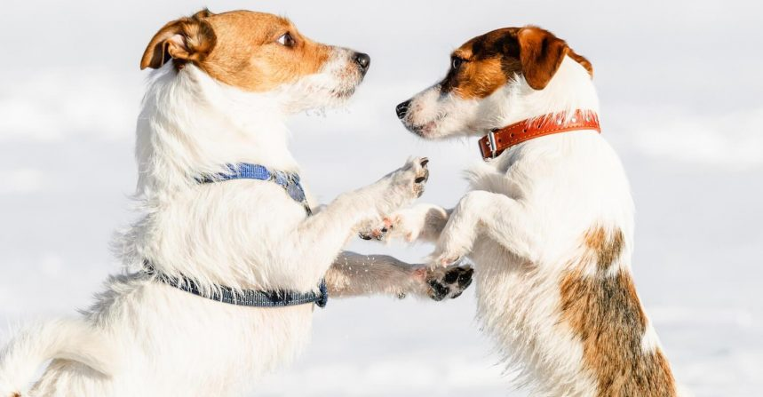 Collar Vs. Harness: Which Is Best For Your Dog?