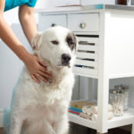 Common Health Problems for Popular Dog Breeds