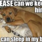 Cute Dog and Cat Quotes And Pictures