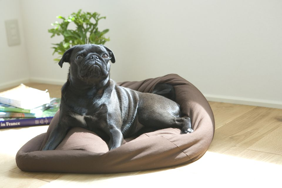 Dog Bed Training: How to Teach a Dog to Go to Bed
