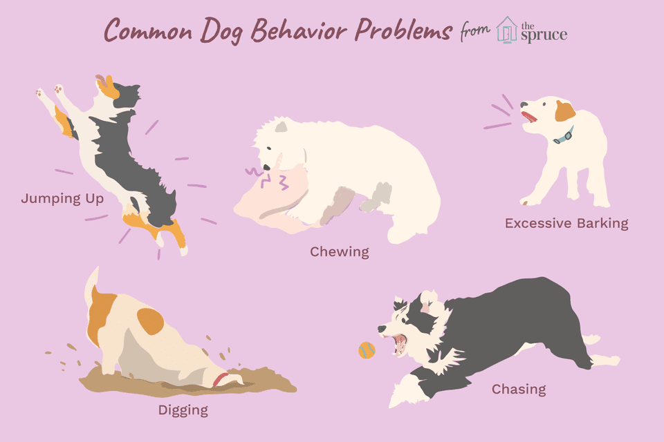 Dog Behavior Problems – Stealing and Stay Away