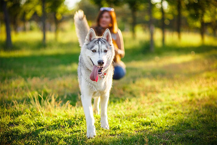 Best Dog Breeds For People With An Active Lifestyle
