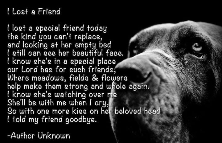 17 Emotional Dog Death Quotes