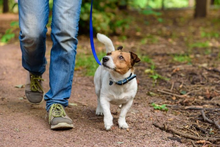 Things You Should Know About Guide Dog Etiquette