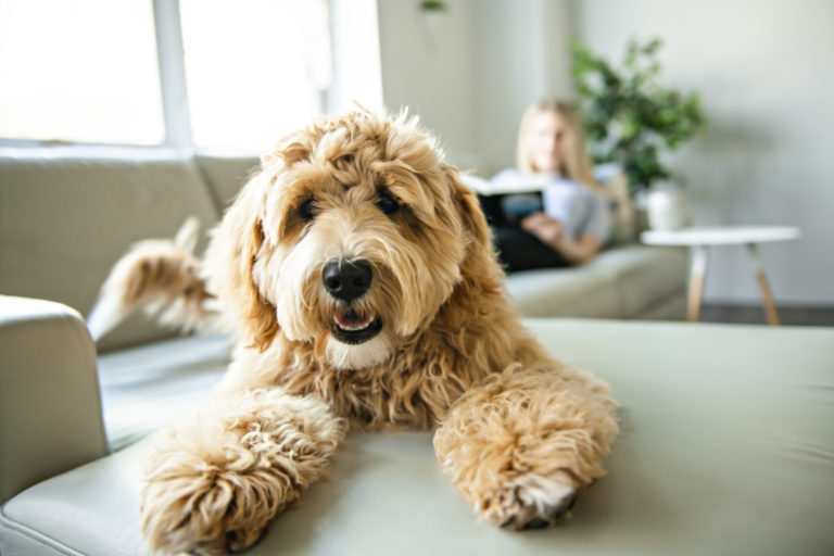 Cool Dog Facts: Fun Facts About Dogs You Never Knew