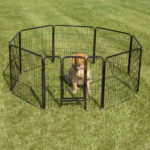 History of the Dog Fence