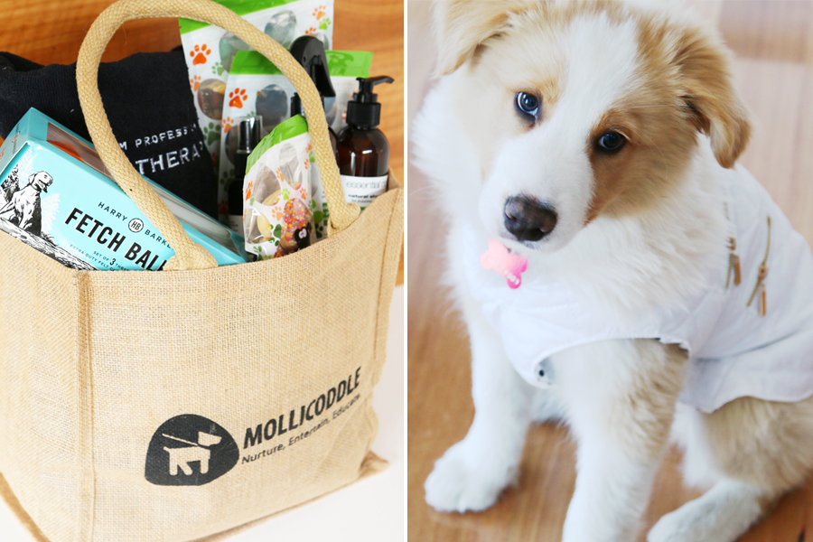 5 Tips To Selecting A Great Dog Gift