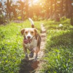 Dog Health Tips – Keeping Your Dog Healthy