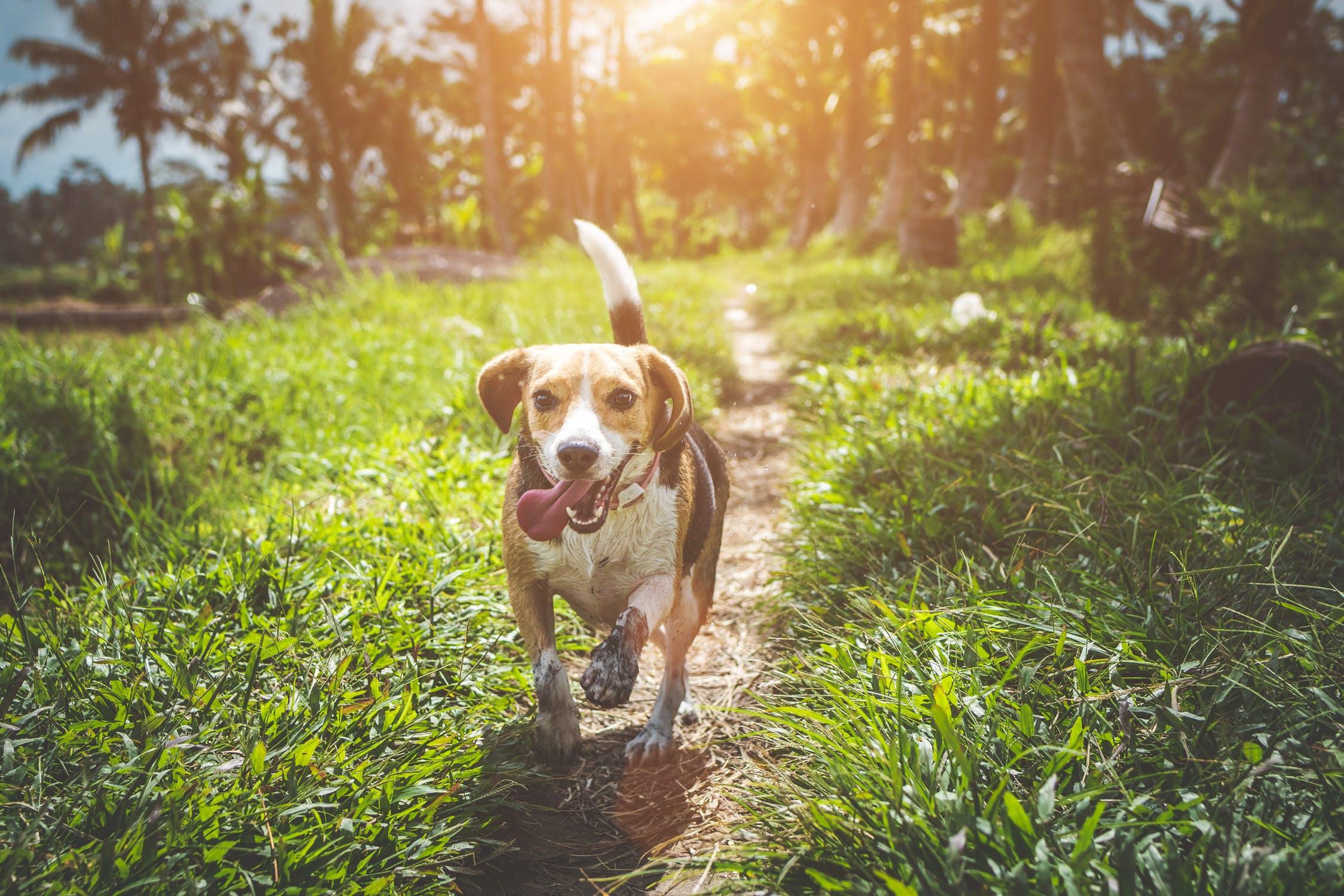 Dog Health Tips – Keeping Your Dog Healthy