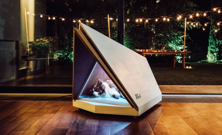 16 Exclusive Dog House Design