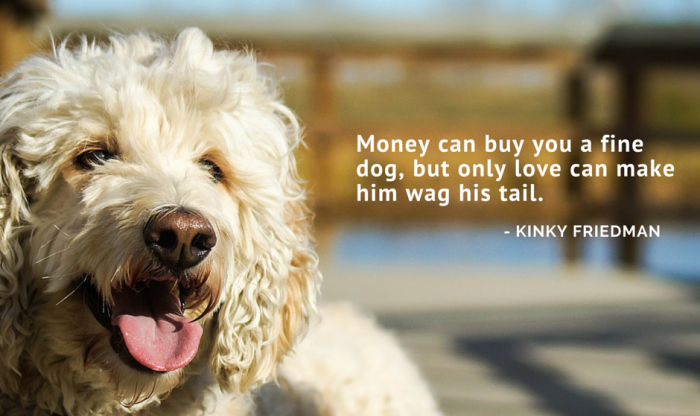17 Cute Dog Love Quotes