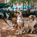 important things to look for in a dog sitter