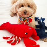 Dog toys: How to pick the best and safest