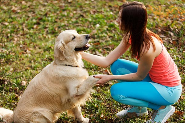 Dog Training For The Holidays and Safety Reminders