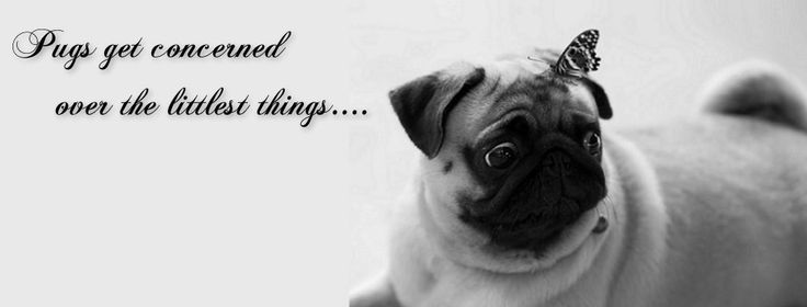 Beautiful Dogs Quotes Facebook Covers Photos