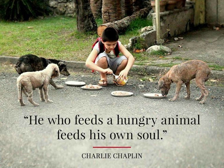 Feed A Dog Quotes