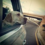 How To Have A Fun And Safe Road Trip With Your Dog