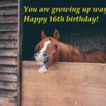 Funny 16th Birthday Wishes