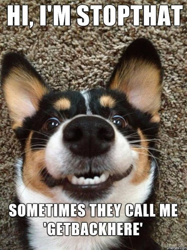 Top 15 Funny Dog Quotes