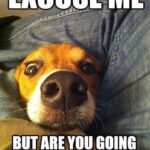Hilarious Funny Dog Quotes