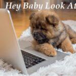 Funny Dog Memes That Make You Laugh