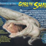 Goblin Shark Pictures