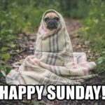 Happy Sunday Funny Memes