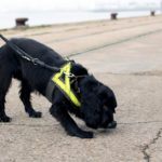 Identifying suitable detection dogs