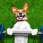 Importance of Regular Exercise for Your Pets