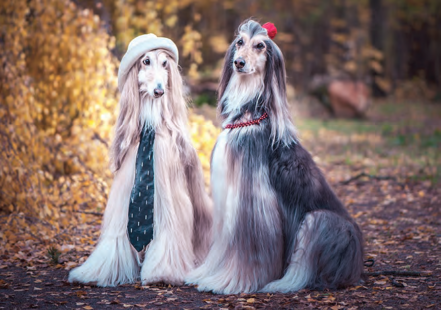 Male Dogs vs. Female Dogs: Which One Is Right for You?