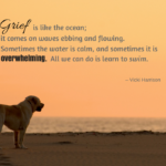 Missing A Dog Quotes