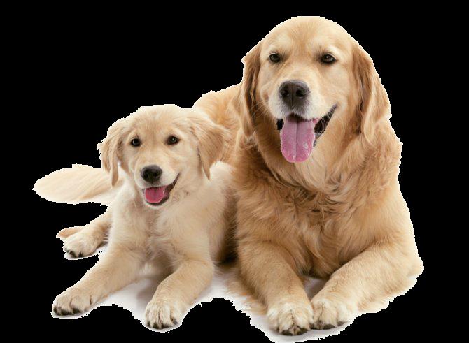 Should I Get A Puppy Or An Older Dog?