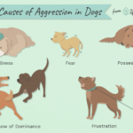 Reasons Why Dogs Are Aggressive and How to Stop It