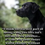20 Sad Dog Quote