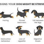 Signs Your Dog is Stressed and How to Relieve It