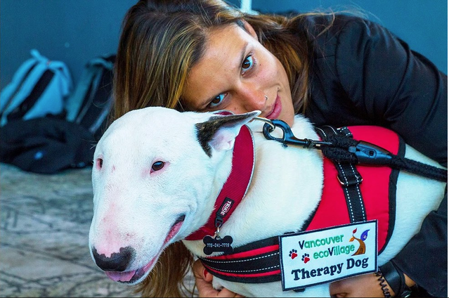 Therapy Dogs – The Different Types & Their Benefits