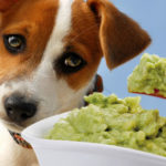 10 Things You Should Be Adding To Your Dog's Food