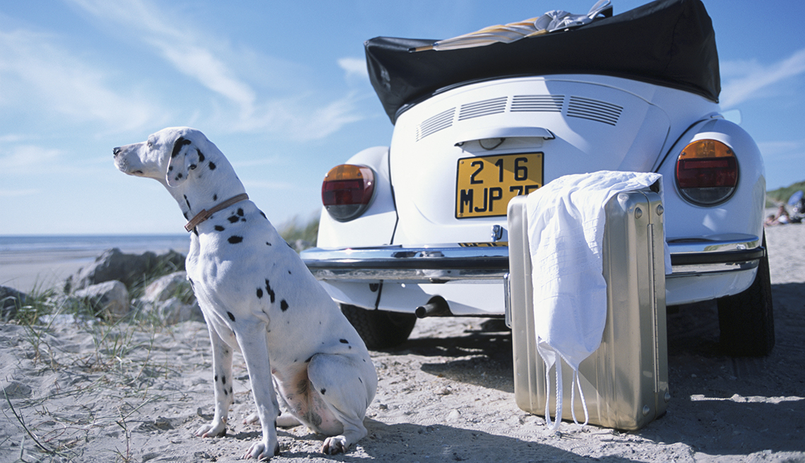 Why and How to Travel With Your Dog