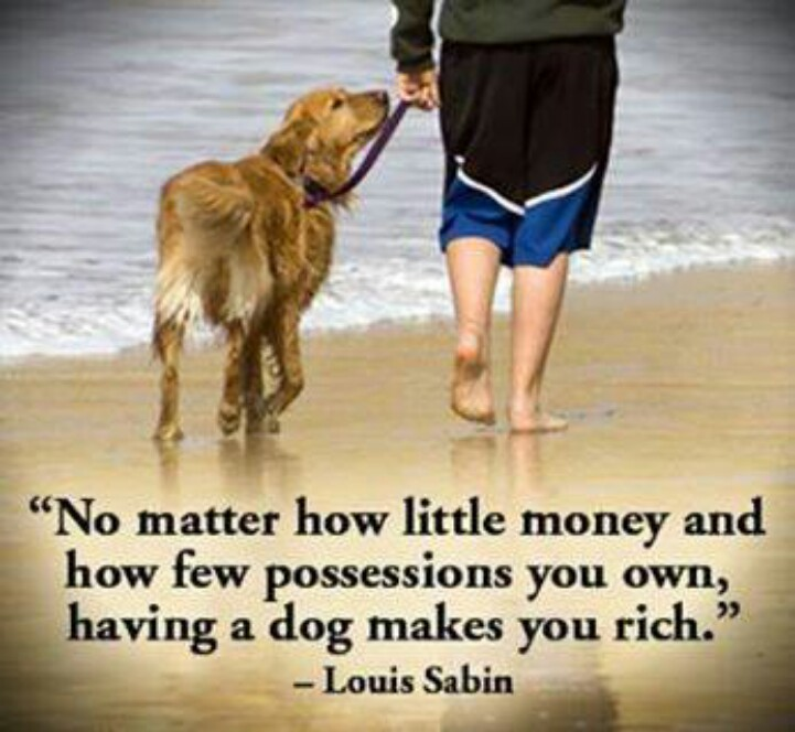20 Unconditional Dog Love Quotes