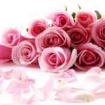 Valentines Day Pink Roses
