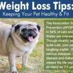 A Weight Loss Guide For Your Obese Dog